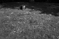 Man In Flowers Mayfair